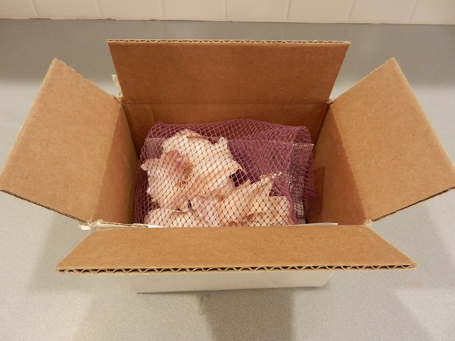Garlic, shipped in box