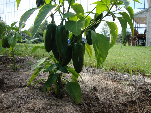Image Result For What To Grow In My Vegetable Garden