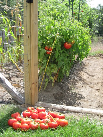 How i planned and prepared for my new vegetable garden the country basket - Country vegetable garden ideas ...