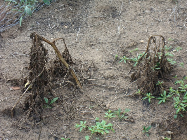 Harvesting And Storing Potatoes From Your Own Home Garden