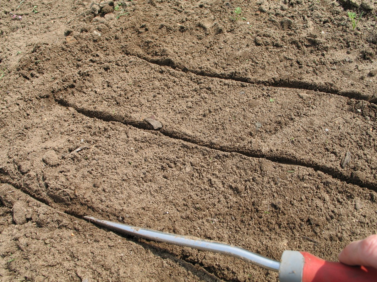 Planting carrot seeds, creating grooves for seeding. Picture tutorial on what to do to seed, sprout and get them to grow.